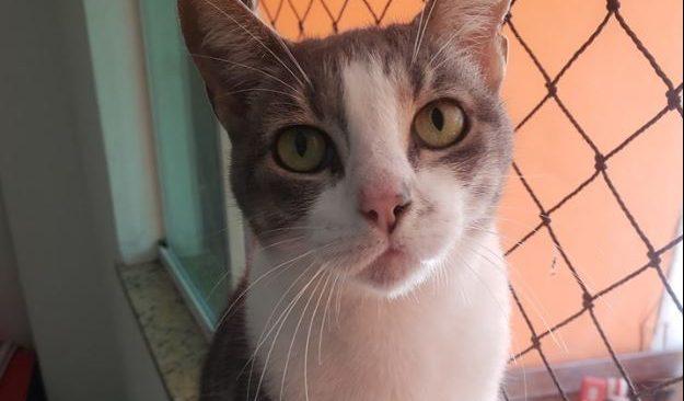 Projeto GUGUZINHO, uma história de amor aos felinos.